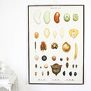 Vintage Danish Seed Chart, Table Four