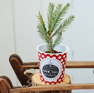 Personalised Grow Your Own Christmas Tree Kit - as seen in the press
