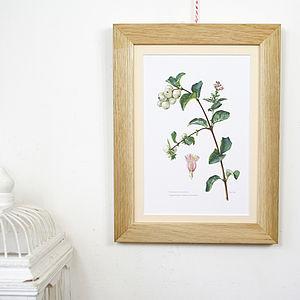 Vintage Framed Print 'Snowberry' - nature inspired art