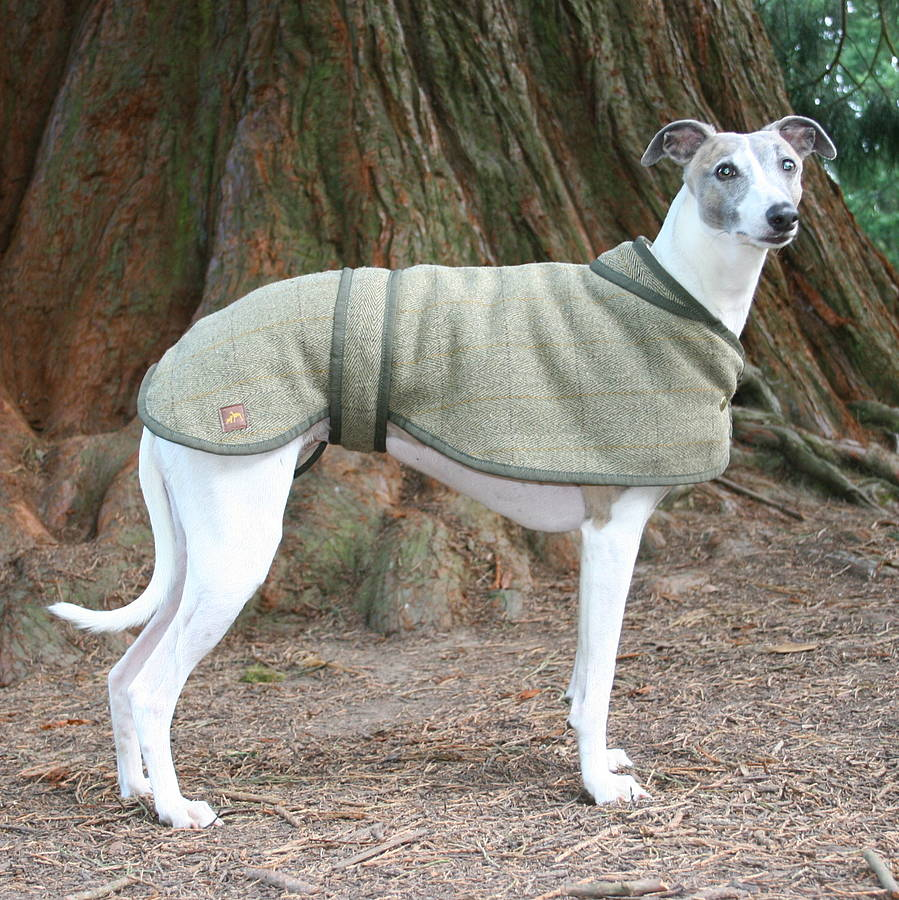 Whippet Dog Coats Uk