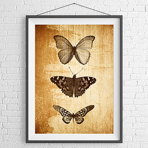 Butterfly Trio Print - animals & wildlife