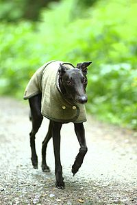 Whippet Dog Coat - clothes