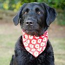 Dog Neckerchief Red Daisy