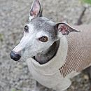 Brown/Oatmeal Double Tweed Gloucester Dog Jumper