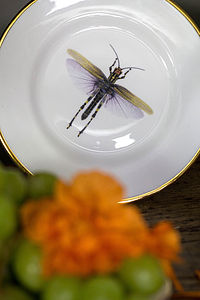 Dragonflies Bone China Plate - tableware