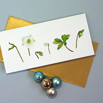'Christmas Rose' Christmas Cards