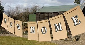 'New Home' Handpainted Bunting - party decorations
