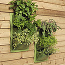 Vertical Planters in new Leaf Green colour