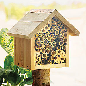 Bee Hotel And Flower Seeds - less ordinary garden ideas