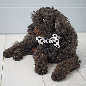Dapper Dog Bow Tie - clothes