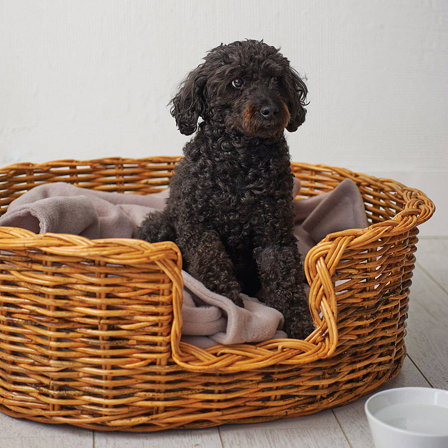 Cats In Dog Baskets Video