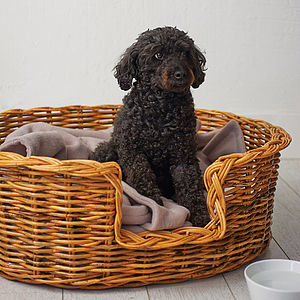 Oval Rattan Pet Basket For Cats Or Dogs - shop the christmas catalogue