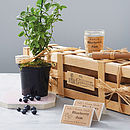 Grow Your Own Blueberry Jam Gift
