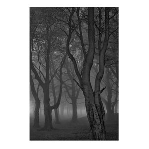 'Moonlit Copse' Fine Art Photographic Print - monochrome