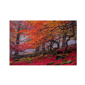 'Deep In The Forest…' A3 Fine Art Photographic Print