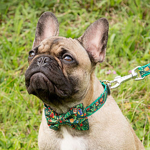 Traditional Christmas Bow Tie Dog Collar - pet collars