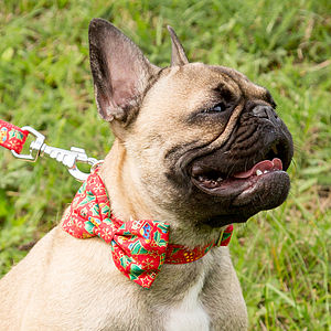 Jolly Christmas Print Bow Tie Dog Collar - walking