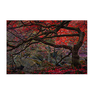 The Twisted Tree Print - nature & landscape