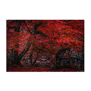 The Red Forest Print - 100 limited edition art prints