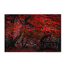 The Red Forest Print
