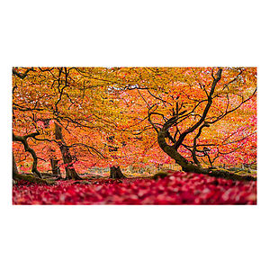 Enchanted Wood Print - nature & landscape