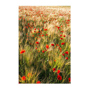 Poppy Meadow Print - nature & landscape
