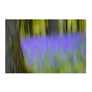 Bluebell Wood Print - 100 limited edition art prints