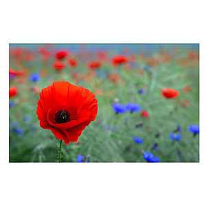 Red Poppy Print - home sale