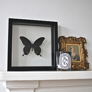 Deiphobus Framed Butterfly - decorative accessories