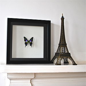 Purple Spotted Swallowtail Framed Butterfly