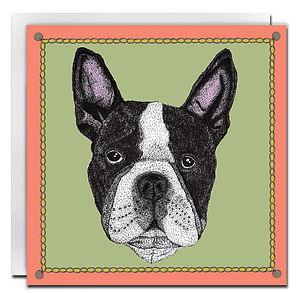 Boston Terrier Card