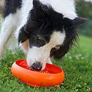 Dog drinking from the ThrowBowl