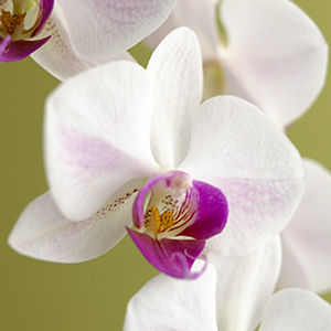 Orchid Indoor And Outdoor Canvas