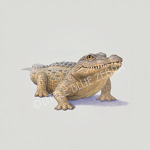 Illustrated Crocodile Print - children's pictures & paintings
