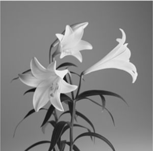 Lily Bunch Indoor And Outdoor Canvas