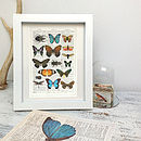 Butterflies Bugs Antique Book Page Art Print