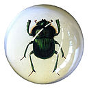 Green Beetle Paperweight
