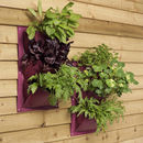 Vertical Planters - Aubergine colour