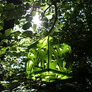 Kiwi Green bird feeder