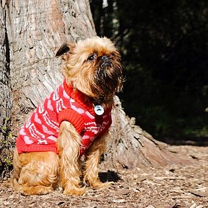 Mr Digby Loves Bacon Knitted Dog Jumper - pet clothes & accessories