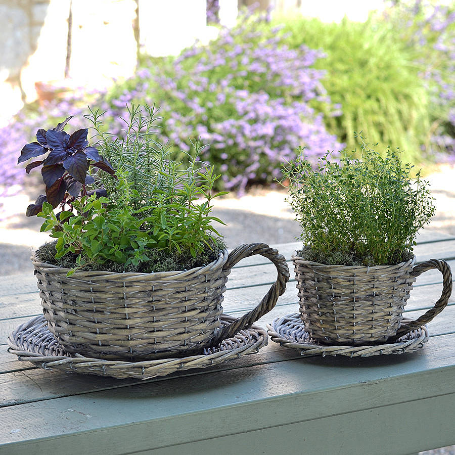 Set Of Two Willow Teacup Planters And Herb Garden Kit By