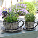 Set Of Two Willow Teacup Planters And Herb Garden Kit
