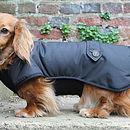Waterproof Dachshund Underbelly Dog Coat
