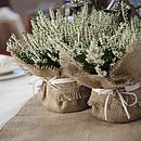 Hessian Plant Wrap, With Satin Trim