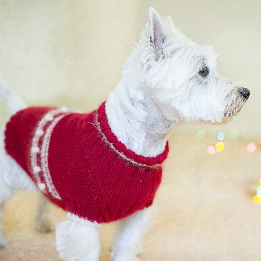 cracking christmas dog jumper knitting kit by redhound for ...
