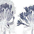 Agapanthus Notelets