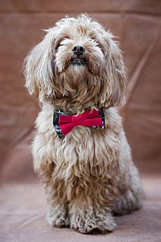 Novelty Bow Tie Dog Collar