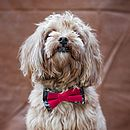 Novelty Dog Bow Tie Collar Red And Black
