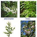 Tree seedlings available