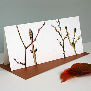 ' Winter Branches ' Botanical Card